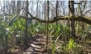 Scenic nature trail in the woods